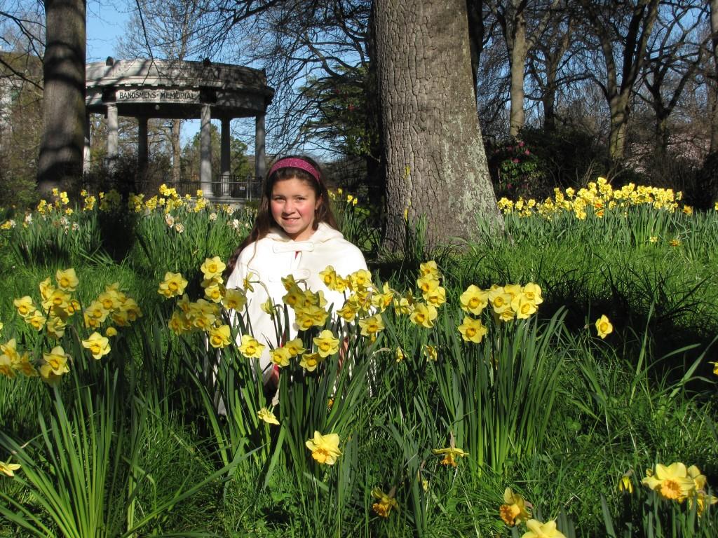 Spring Daffodils in Hagley Park